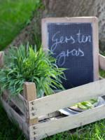 Wie bitte, du isst Gras? Absolut! Gerstengras. (Giveaway)